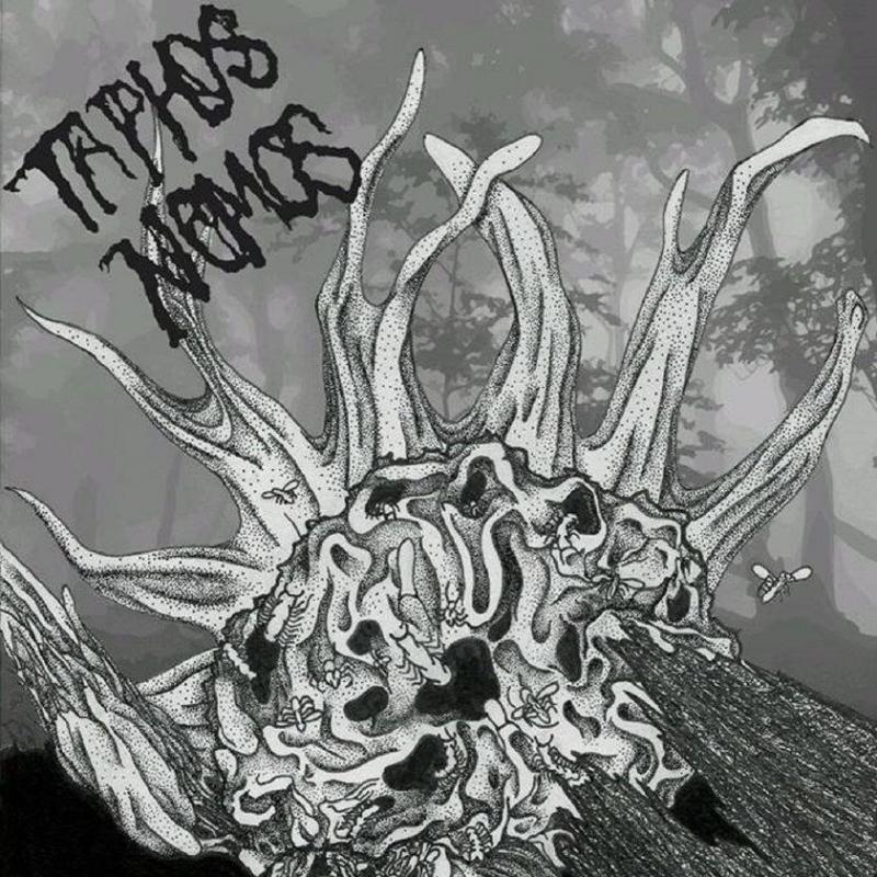 Taphos rehead